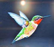 Google Hummingbirds Update